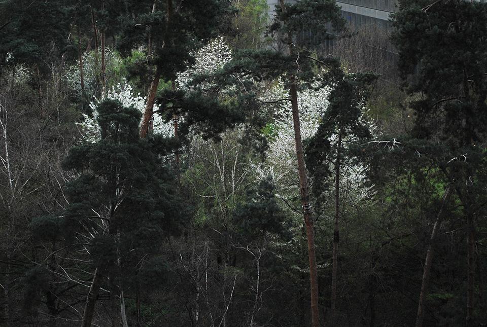 paris bnf jardin intérieur