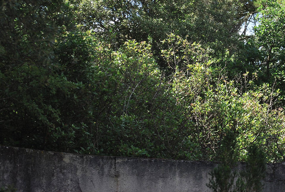 sud ouest vegetation