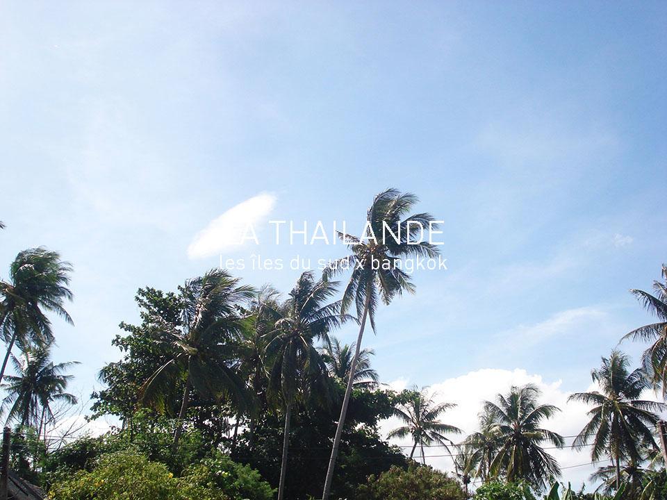 thailande palmier