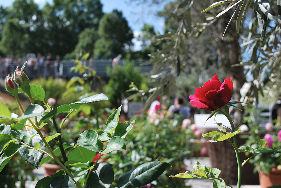 jardins d'orient ima