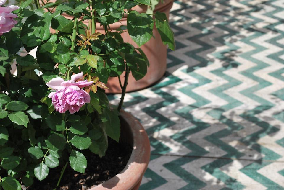 roses de damas ima