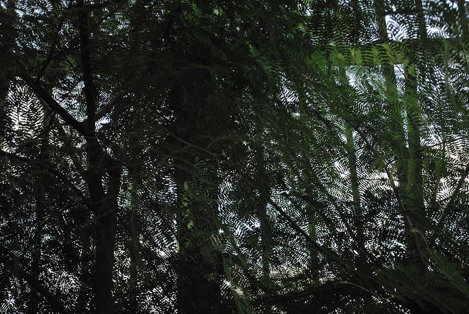 grande-serre-feuillage