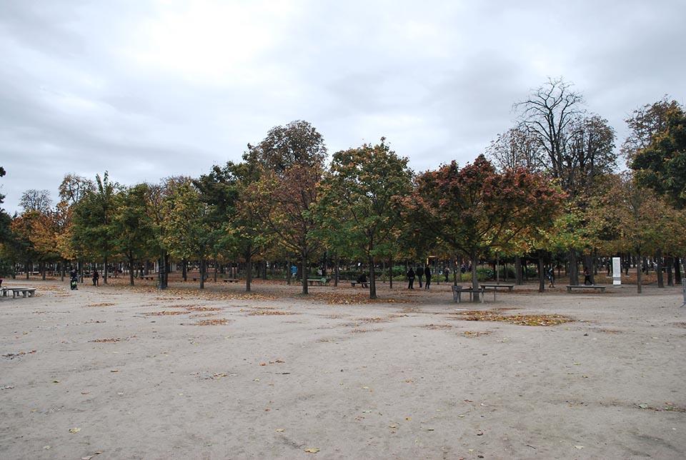 tuileries-arbres