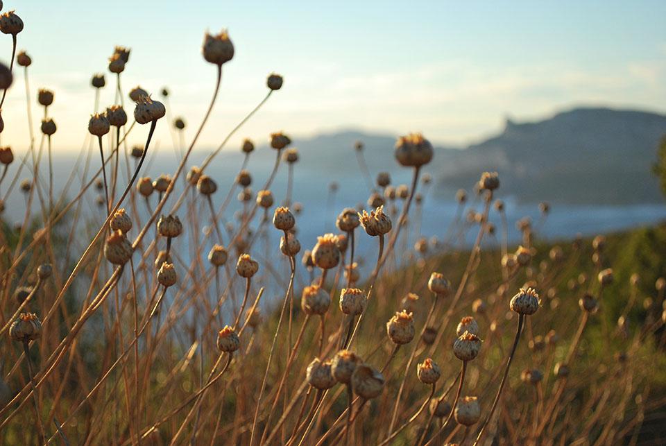 vegetation route des cretes