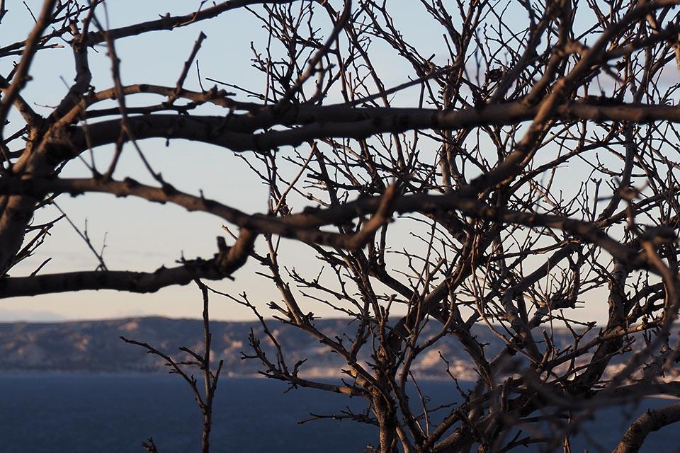 marseille branche hiver