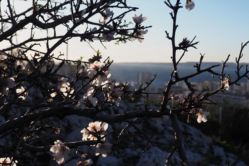 printemps marseille